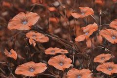 Flores rojas en fondo borroso Fondo floral Wildflowers rojos en la hierba Fotos de archivo