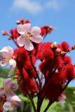 Flores rojas en la naturaleza Fotografía de archivo libre de regalías