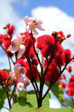 Flores rojas en la naturaleza Foto de archivo