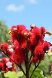 Flores rojas en la naturaleza Imagen de archivo libre de regalías
