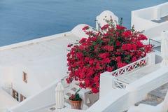 Flores rojas en Santorini Imagenes de archivo
