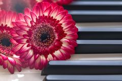 Flores rojas en un teclado de piano fotografía de archivo libre de regalías