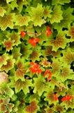 Flores rojas entre las hojas Fotos de archivo libres de regalías