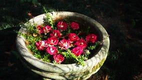 Flores rojas flotantes en un pote fotos de archivo