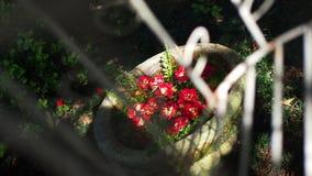 Flores rojas flotantes en un pote que mira a través de la jaula de pájaros foto de archivo