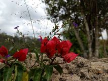 Flores Stock Photo