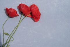 Flores rojas hermosas en fondo del cemento Foto de archivo libre de regalías