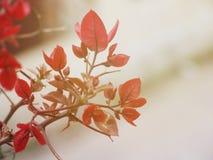 Flores rojas hermosas en jardín Fotografía de archivo