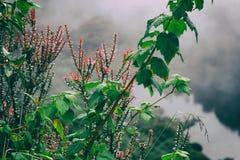 Flores Rojas Largas Y Hojas Verdes Imagen De Archivo Imagen De