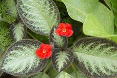 Flores rojas minúsculas en el fondo verde foto de archivo