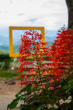Flores rojas naturales en el fondo del bastidor Sabah, Borneo, Malasia foto de archivo