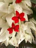 Flores rojas preciosas fotografía de archivo
