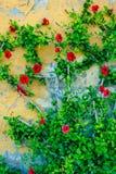 Flores rojas que suben la pared Foto de archivo