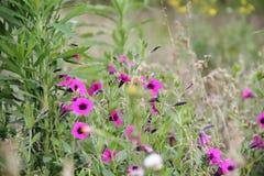 Flores rojas salvajes con el fondo defocused Fotografía de archivo libre de regalías