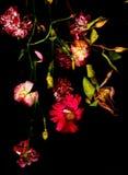 Flores rojas viejas Imágenes de archivo libres de regalías