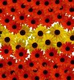 Flores rojas y amarillas Imágenes de archivo libres de regalías