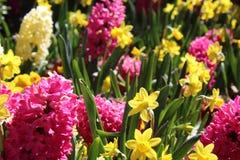 Flores rojas y amarillas con la hierba fotografía de archivo libre de regalías