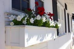 Flores rojas y blancas en un plantador Fotografía de archivo libre de regalías