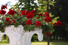 Flores rojas y fondo verde foto de archivo