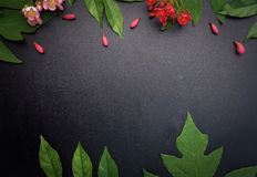 Flores rojas y rosadas con el fondo negro Fotografía de archivo libre de regalías