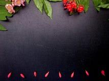 Flores rojas y rosadas con el fondo negro Foto de archivo libre de regalías