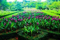 Flores rojas y rosadas del color hermoso del extracto en los parques del jardín público imagenes de archivo