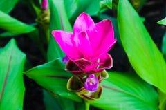 Flores rojas y rosadas del color hermoso del extracto en los parques del jardín público imágenes de archivo libres de regalías