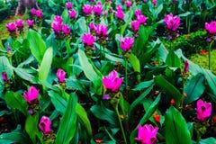 Flores rojas y rosadas del color hermoso del extracto en los parques del jardín público fotos de archivo
