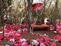 Flores rojas y rosadas en los jardines por la bahía Singapur imagenes de archivo