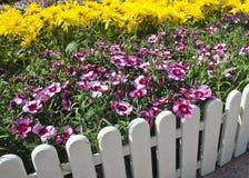 flores Rojo-y-blancas Imagenes de archivo