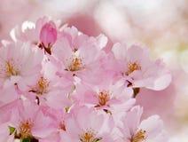 Flores románticas. Fotos de archivo