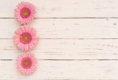 Flores románticas en el fondo de madera lamentable blanco imagen de archivo libre de regalías