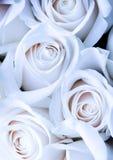 Flores românticas Fotografia de Stock