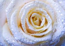 Flores românticas Imagens de Stock Royalty Free