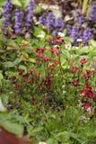 Flores rosa e formato do jardim ornamental de retrato azul fotos de stock royalty free