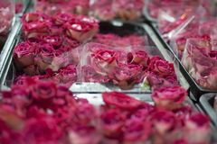 Flores rosa e roxo fotografia de stock