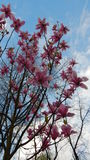 Flores rosadas Fotos de archivo