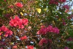 Flores rosadas Imagenes de archivo