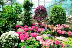 Flores rosadas, blancas y azules en Palmen Garten, Frankfurt-am-Main Imagen de archivo