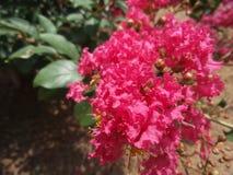 Flores rosadas brillantes Imagenes de archivo