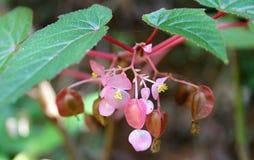 Flores rosadas colgantes Fotos de archivo libres de regalías