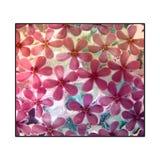 Flores rosadas congeladas en blanco Fotos de archivo libres de regalías
