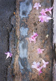 Flores rosadas de la calle imagen de archivo