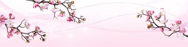 Flores rosadas de la cereza aisladas en el fondo blanco stock de ilustración