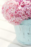 Flores rosadas de la hortensia Fotografía de archivo