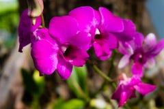 Flores rosadas de la orquídea Fotos de archivo libres de regalías