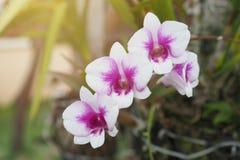 Flores rosadas de la orquídea Fotografía de archivo
