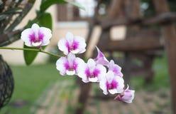 Flores rosadas de la orquídea Fotografía de archivo libre de regalías