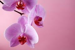 Flores rosadas de la orquídea en un fondo en colores pastel Fotografía de archivo