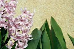 Flores rosadas de la primavera Imagen de archivo libre de regalías